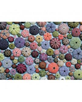 puzzle oursins 1000p